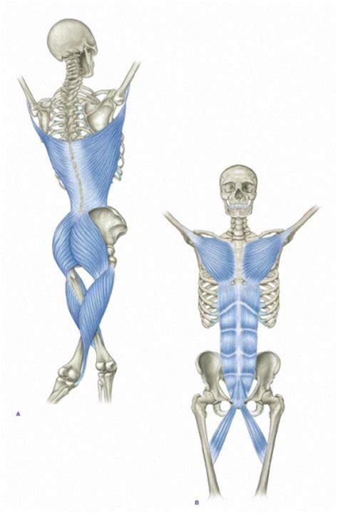 Functional Anatomy Of Shoulder