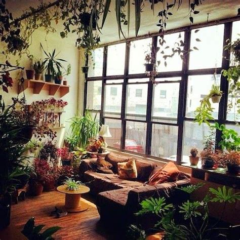 indoor plants for rooms 25 best ideas about plant rooms on plants