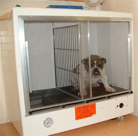 dryer for dogs grooming blower dryers drying