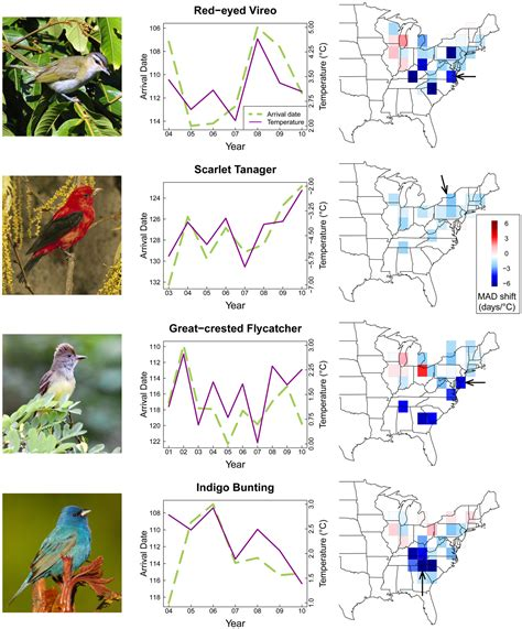 phenological synchrony and bird migration changing climate and seasonal resources in america studies in avian biology books is climate change already changing the seasons cool