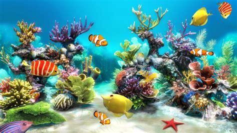aquarium desktop wallpaper hddesktopwallpaperorg