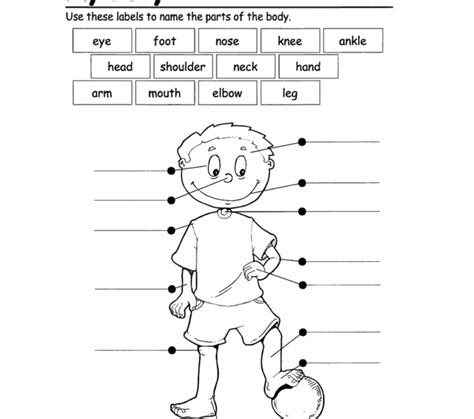 printable activities for children parts of the body french body parts worksheets kids coloring europe