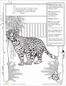 Jaguar Behavioral Adaptations Jaguar Facts Worksheet Education
