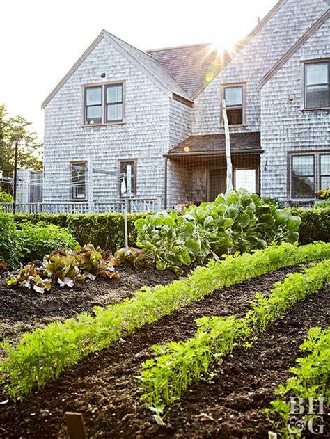 beginner vegetable garden  homes gardens