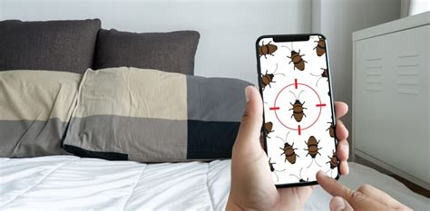 rid  bed bugs     effective bed bug treatments lifestyle