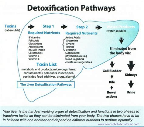 Wiseman Method Detox Define by What Happens When You Detox Nourish Holistic Nutrition