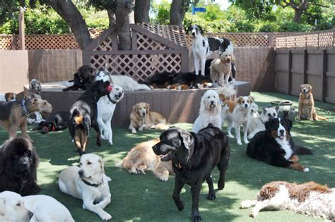 dog in backyard bone backyard dog daycare dog boarding orange county