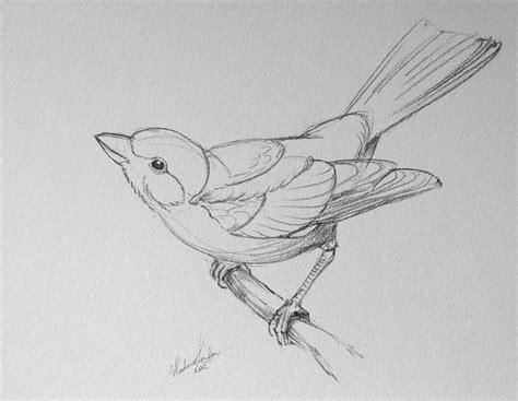 How To Draw Bird Best 20 Bird Drawings Ideas On Simple Bird