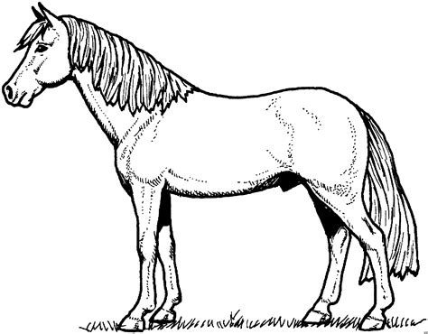 black and white coloring pages of horses pferd mit schoenem schweif ausmalbild malvorlage tiere