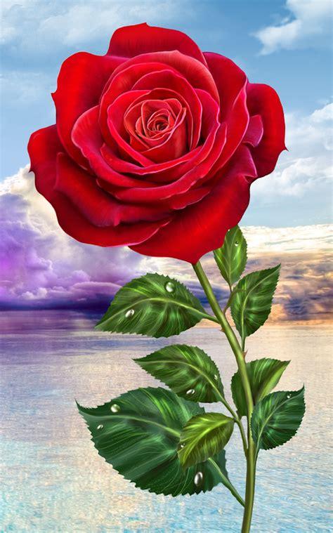 imagenes perronas de rosas rosa toque m 225 gico flores aplicaciones de android en