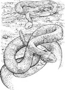 copperhead snake coloring page northern copperhead snake and timber rattlesnake coloring