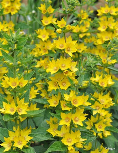 My Wild Garden Greenfingers Homes For Wildlife The Yellow Garden Flowers