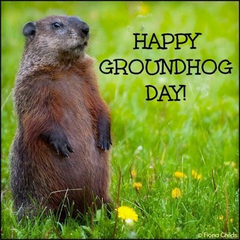 groundhog day morning happy groundhog day image quote pictures photos and