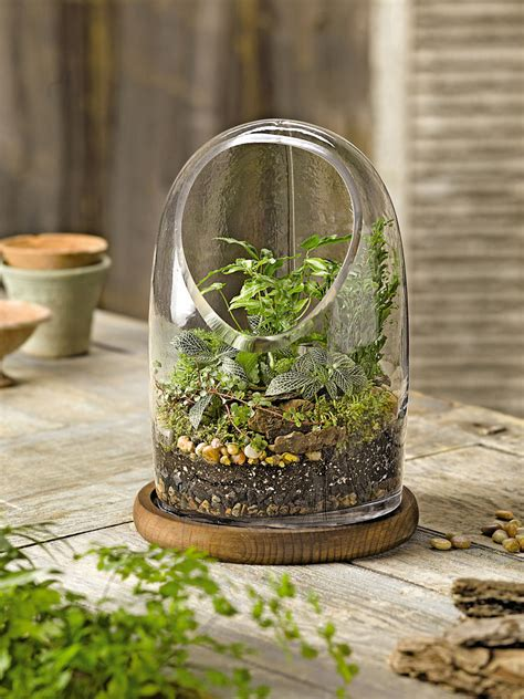 oval top glass terrarium gardener s supply
