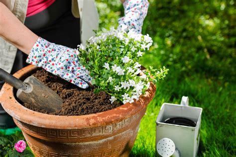 geranien pflanzen ab wann bildquelle 169 jari hindstroem
