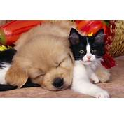 Cute Dog Cat HD Wallpaper  StylishHDWallpapers