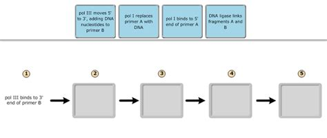 the flowchart below describes the events of the ovarian cycle print 3 chs 5 dna structure and replication
