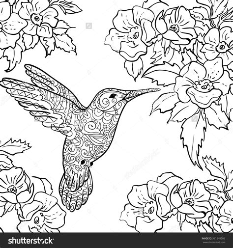 Coloring Page Hummingbird by Tailed Sylph Coloring Tailed Sylph