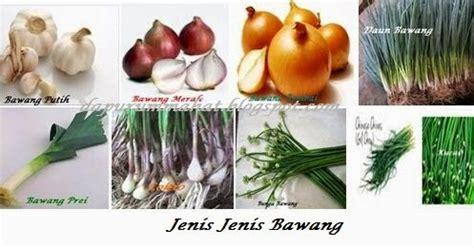 dapur ummahat mengenal jenis jenis bawang
