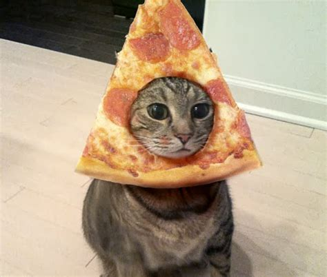 pizza kittens pizza cats caterville