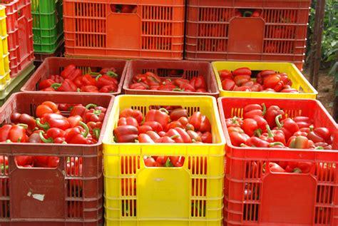 packing house gilad desert produce ltd packing house