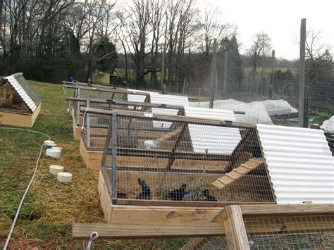 Put Grass In Backyard Rabbit Tractor Raised Beds Spellcast Farm And Photography
