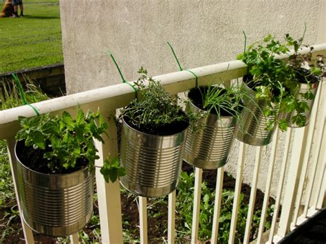 Petersilie Garten Pflanzen by Kr 228 Utergarten Anlegen Was Darf Auf Ihrem Balkon Nicht