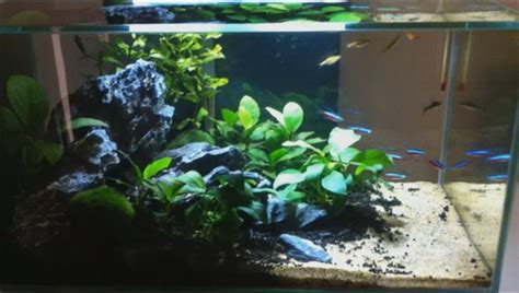 fluval edge aquascape 17 best images about tanked on pinterest tropical fish photo editor online and