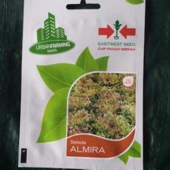 Benih Selada Hijau benih selada merah hijau almira 100 biji panah merah
