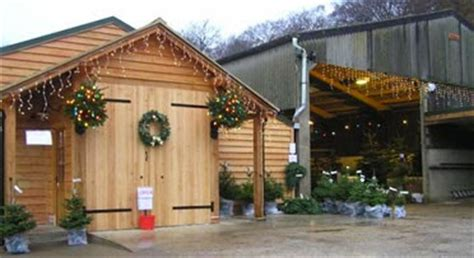 curiouser and curiouser the tree barn at christmas common