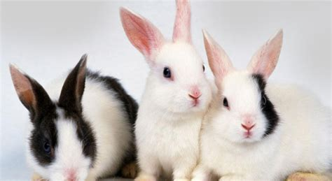 7 Facts On Bunny Rabbits by Facts About Rabbits