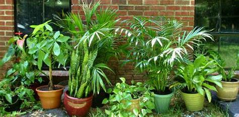 common house plants that are poisonous to cats guide to poisonous and nontoxic houseplants today s