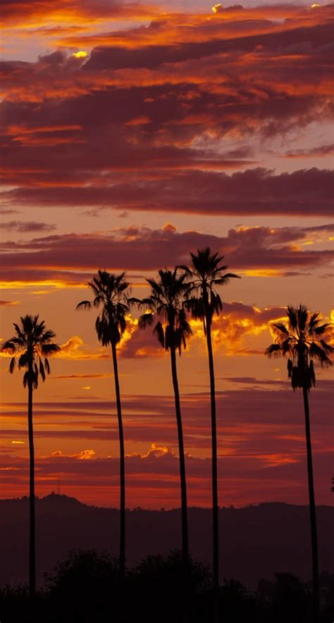 Live Palm Tree Wallpaper by Sunset Live Wallpaper For Your Iphone Live Wallpapers