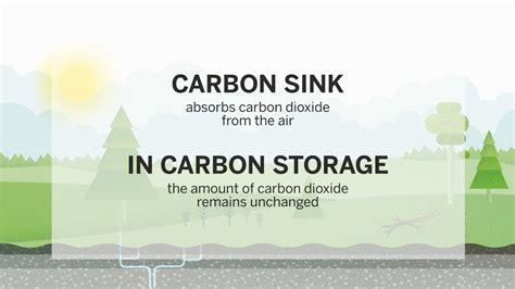 what is a carbon sink what is a carbon sink