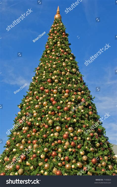 a very big christmas tree and sky stock photo 7105825