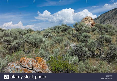 rugged landscape rugged landscape of scrub land rocks and high ground in yellowstone stock photo royalty free