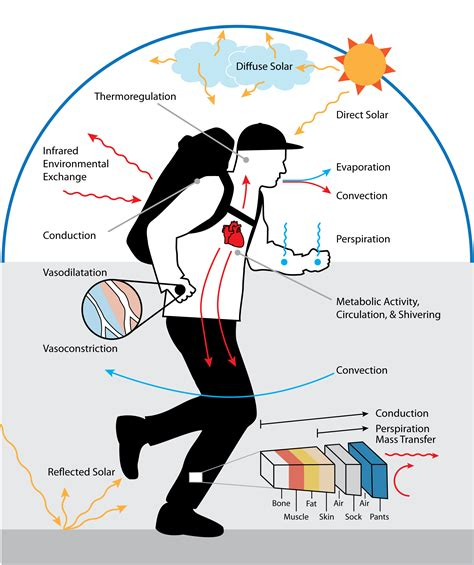 technology for comfort human simulation thermoanalytics