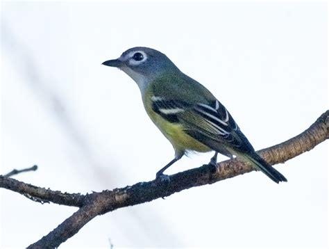bird id eastern ontario canada birdforum