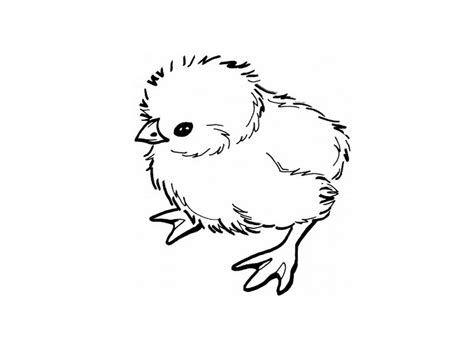coloring sheets of baby chicks baby chick coloring pages online 174116 171 coloring pages
