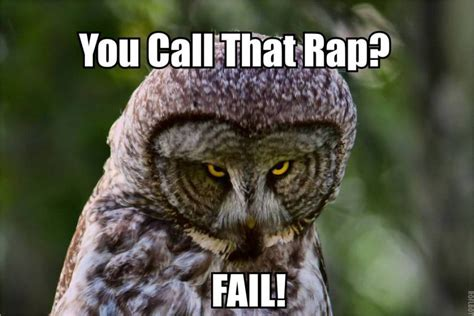 Who Owl Meme - hilariously adorable owl memes 4