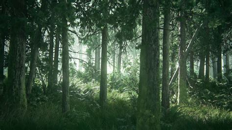 tlou beautiful forest hd desktop wallpaper