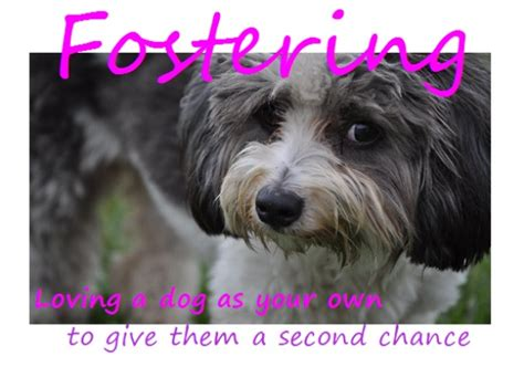 foster dogs florida rescue foster a