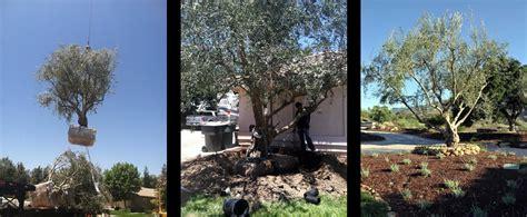 tree farms fresno ca 28 images 5 acres in fresno