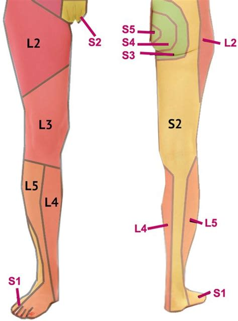 The Leg L by Sciatica What Is It What Causes It What Do I Do If I It Osteopath Bath