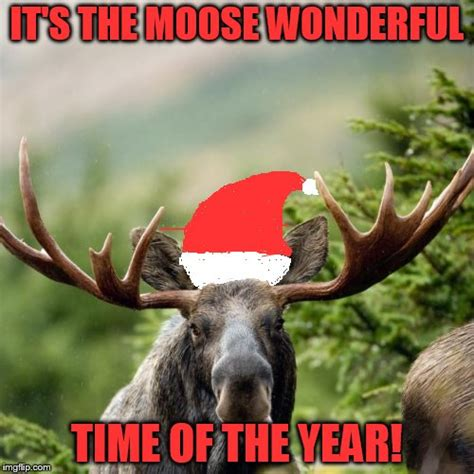 moose memes imgflip
