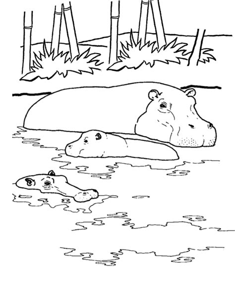 coloring page of a river wild animal coloring page river hippo coloring page