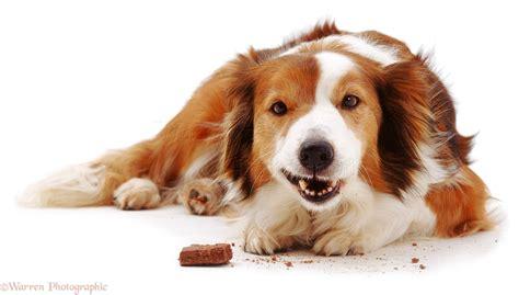 alimenti che i cani non possono mangiare cosa possono mangiare i cani e cosa non devono mangiare