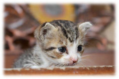 wallpaper bintang kucing hewan lucu 2016 hewan lucu galau images