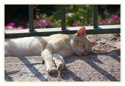 katze zuckt beim schlafen spanische katze beim schlafen bild foto nadine