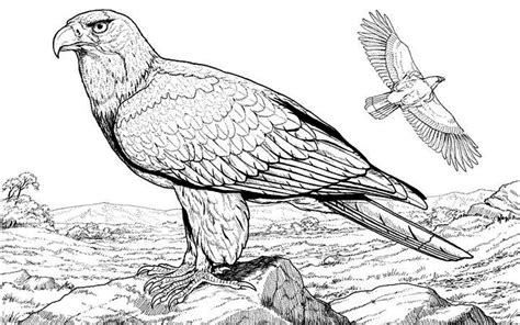 eagle coloring pages for adults eagles lions of the sky coloring pages